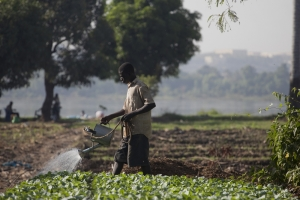 Climate change and farmers in Mali